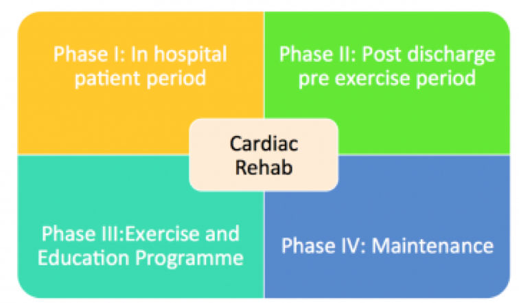 cardiac phases